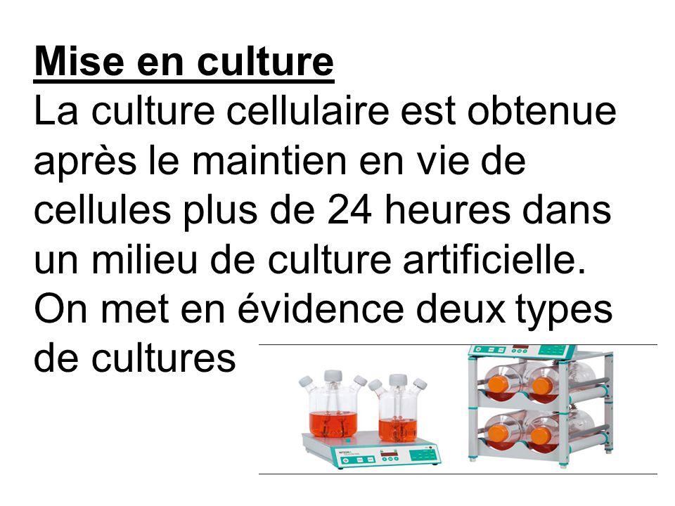 Mise en culture La culture cellulaire est obtenue après le maintien en vie de cellules plus de 24 heures dans un milieu de culture artificielle. On me