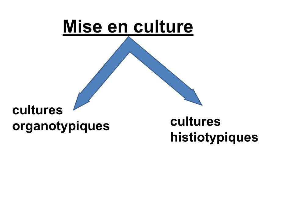Mise en culture cultures histiotypiques cultures organotypiques