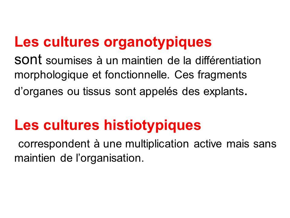 Les cultures organotypiques sont soumises à un maintien de la différentiation morphologique et fonctionnelle. Ces fragments d'organes ou tissus sont a
