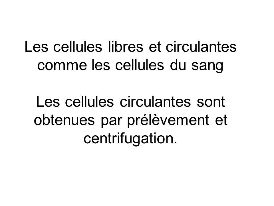 Les cellules libres et circulantes comme les cellules du sang Les cellules circulantes sont obtenues par prélèvement et centrifugation.