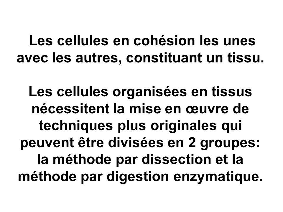 Les cellules en cohésion les unes avec les autres, constituant un tissu. Les cellules organisées en tissus nécessitent la mise en œuvre de techniques