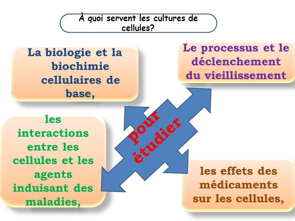 À quoi servent les cultures de cellules? La biologie et la biochimie cellulaires de base, les interactions entre les cellules et les agents induisant