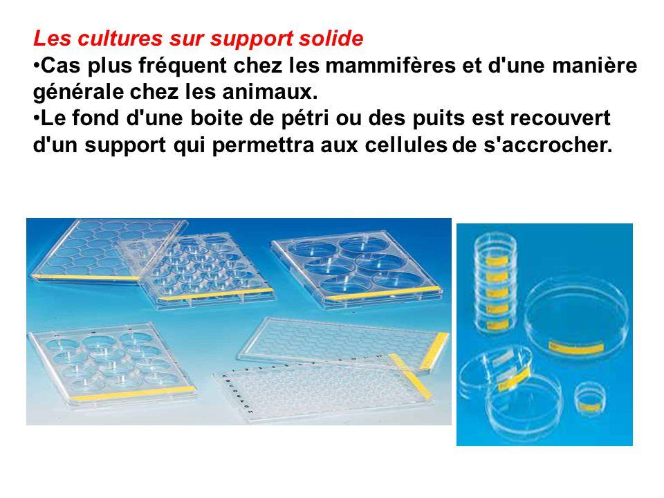 Les cultures sur support solide Cas plus fréquent chez les mammifères et d'une manière générale chez les animaux. Le fond d'une boite de pétri ou des