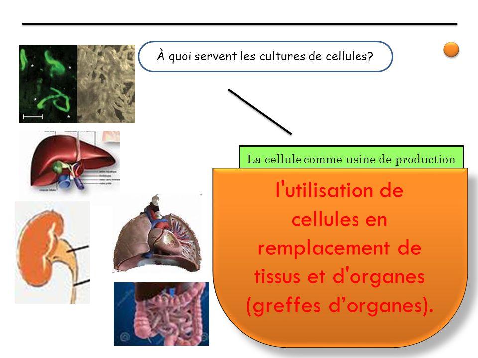 À quoi servent les cultures de cellules? La cellule comme usine de production l'utilisation de cellules en remplacement de tissus et d'organes (greffe