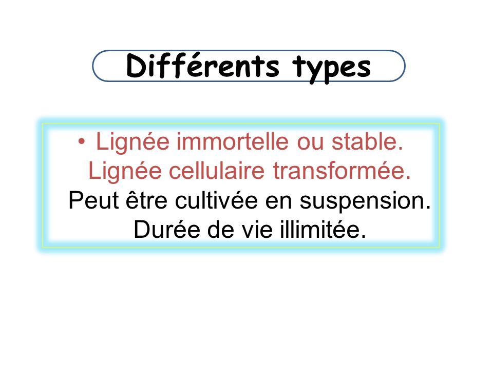 Différents types Lignée immortelle ou stable. Lignée cellulaire transformée. Peut être cultivée en suspension. Durée de vie illimitée.