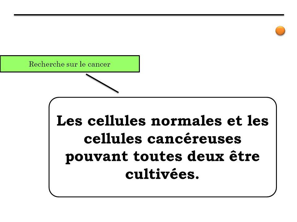 Recherche sur le cancer Les cellules normales et les cellules cancéreuses pouvant toutes deux être cultivées.
