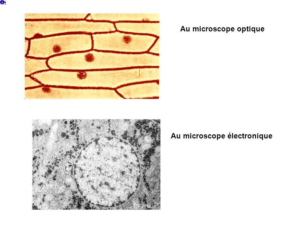 Au microscope optique Au microscope électronique