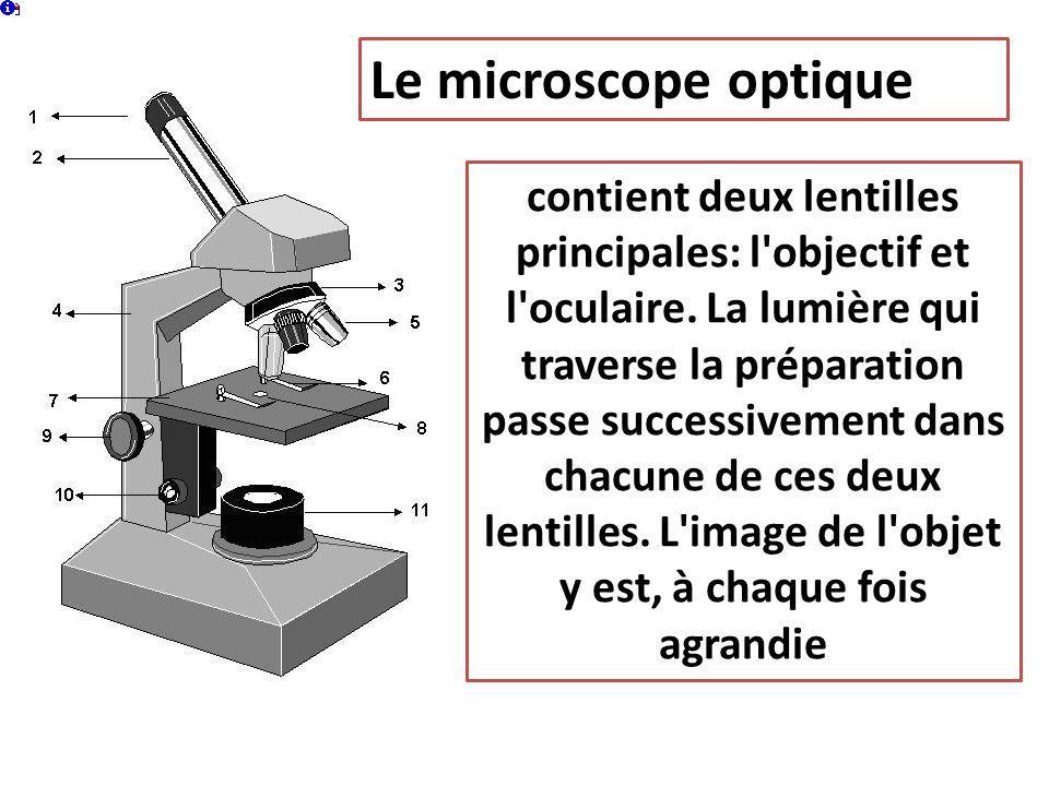 Le microscope optique contient deux lentilles principales: l'objectif et l'oculaire. La lumière qui traverse la préparation passe successivement dans