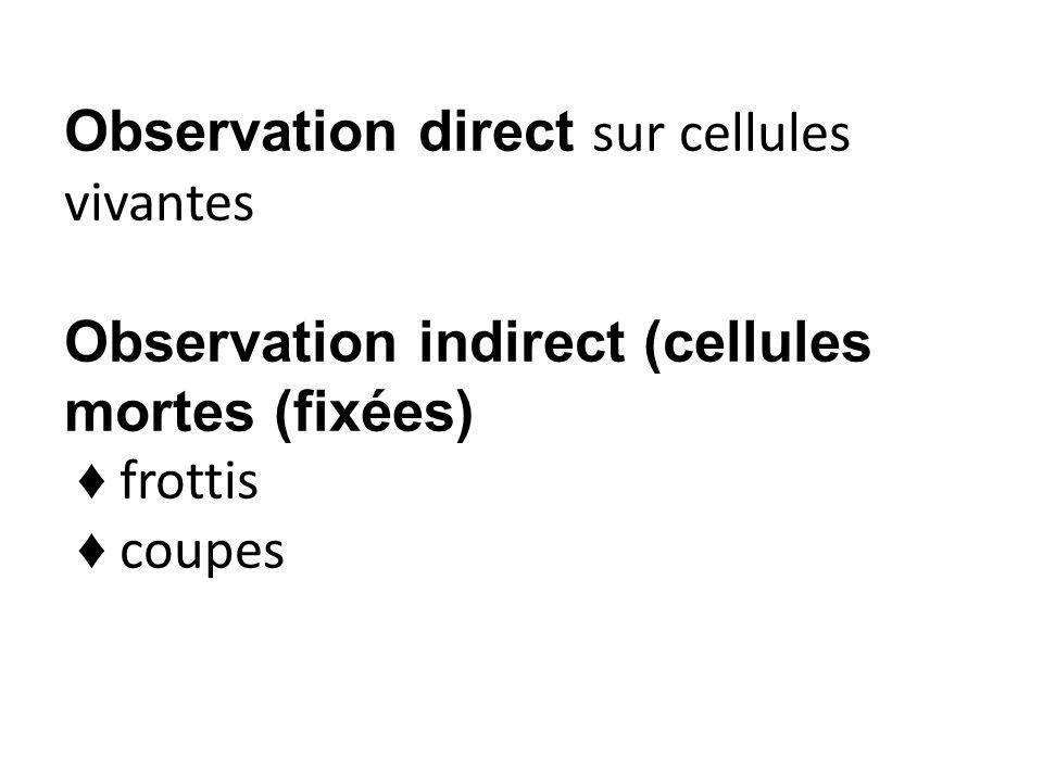 Observation direct sur cellules vivantes Observation indirect (cellules mortes (fixées) ♦ frottis ♦ coupes