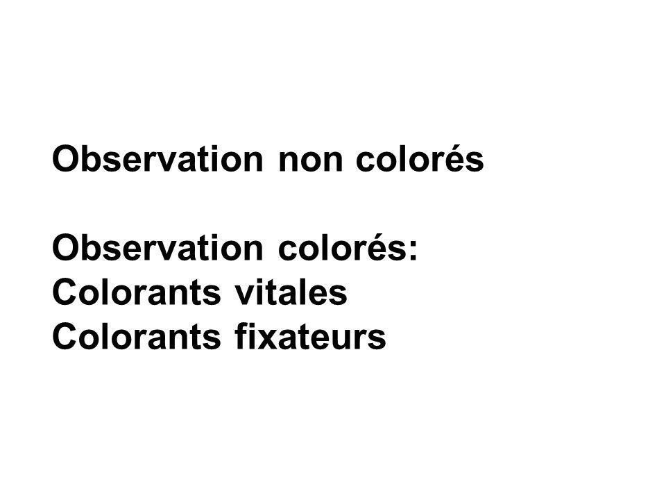 Observation non colorés Observation colorés: Colorants vitales Colorants fixateurs