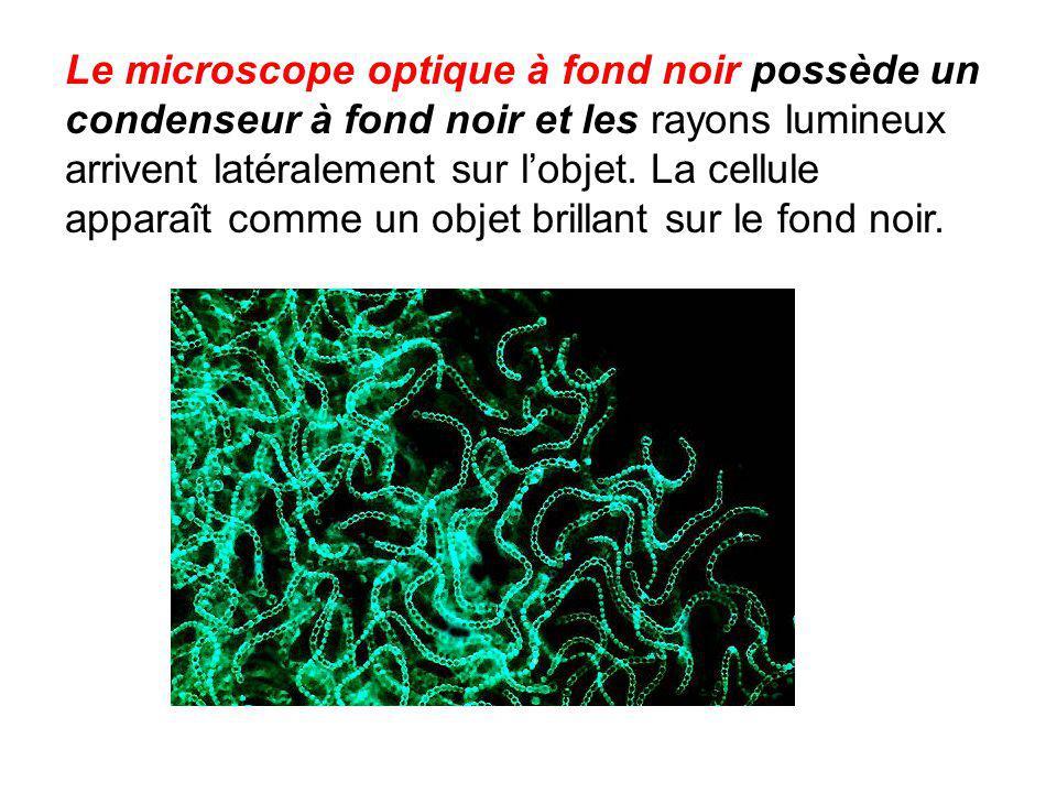 Le microscope optique à fond noir possède un condenseur à fond noir et les rayons lumineux arrivent latéralement sur l'objet. La cellule apparaît comm