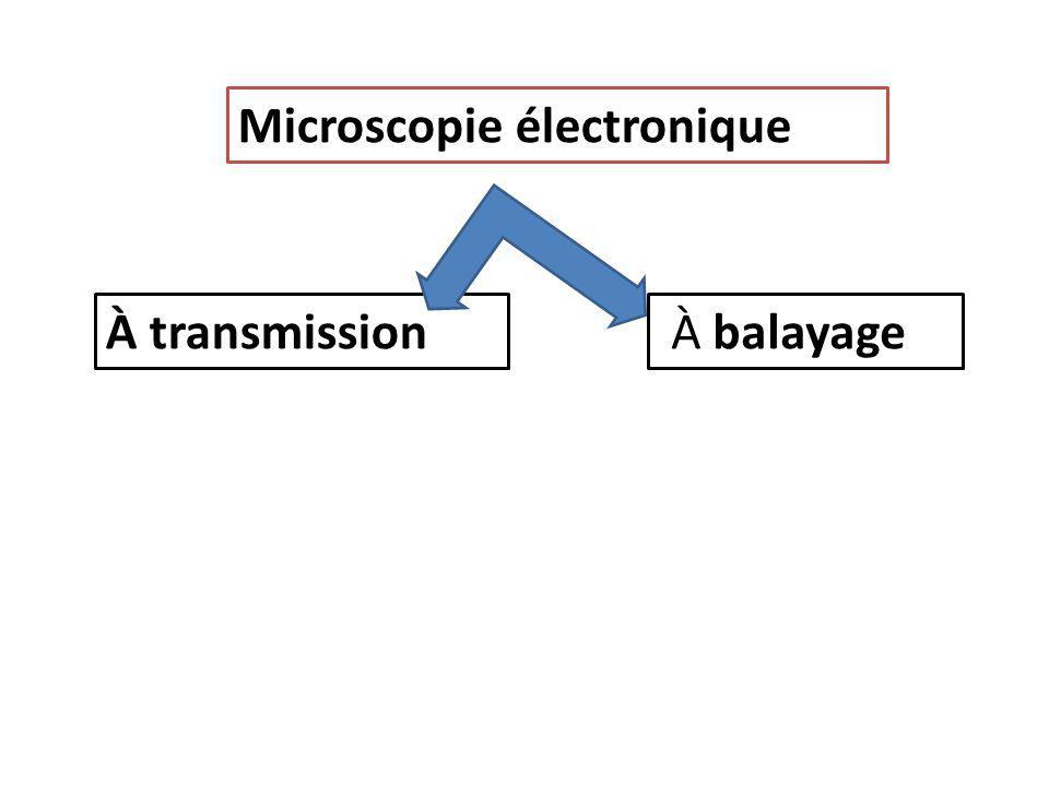 Microscopie électronique À transmission À balayage