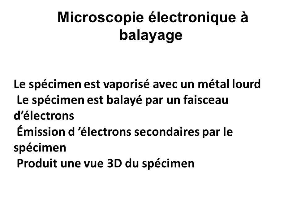 Le spécimen est vaporisé avec un métal lourd Le spécimen est balayé par un faisceau d'électrons Émission d 'électrons secondaires par le spécimen Prod