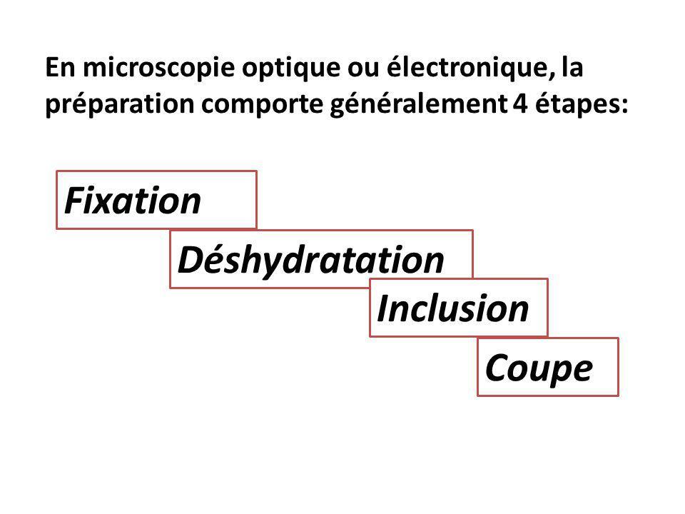 En microscopie optique ou électronique, la préparation comporte généralement 4 étapes: Coupe Fixation Déshydratation Inclusion