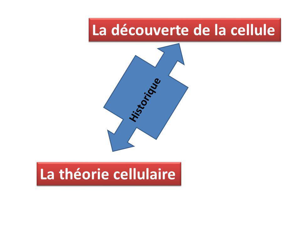 La découverte de la cellule La théorie cellulaire Historique