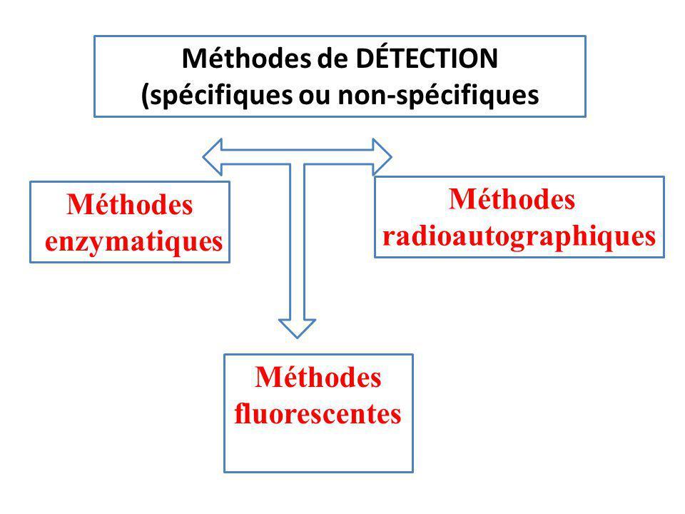 Méthodes de DÉTECTION (spécifiques ou non-spécifiques Méthodes fluorescentes Méthodes radioautographiques Méthodes enzymatiques