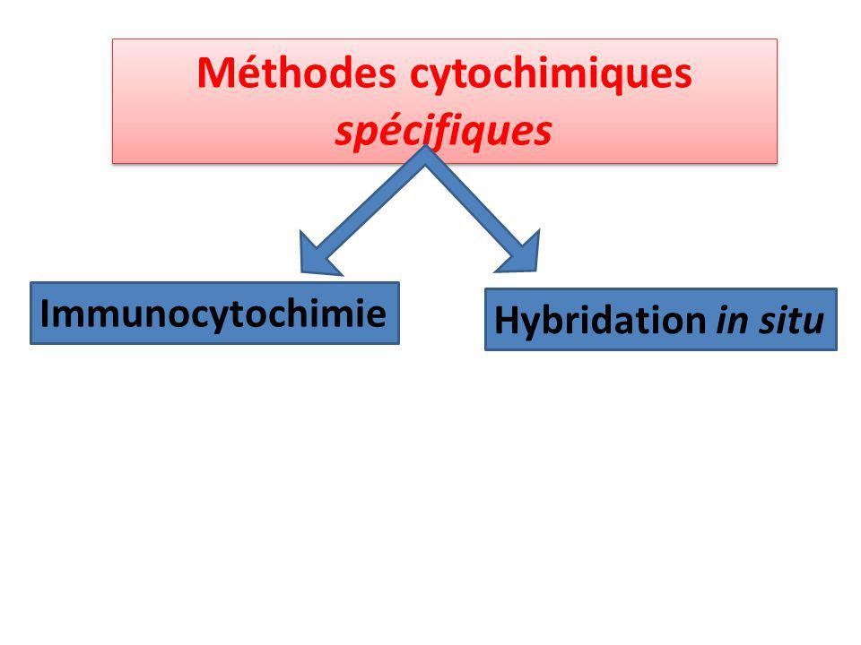 Méthodes cytochimiques spécifiques Méthodes cytochimiques spécifiques Immunocytochimie Hybridation in situ