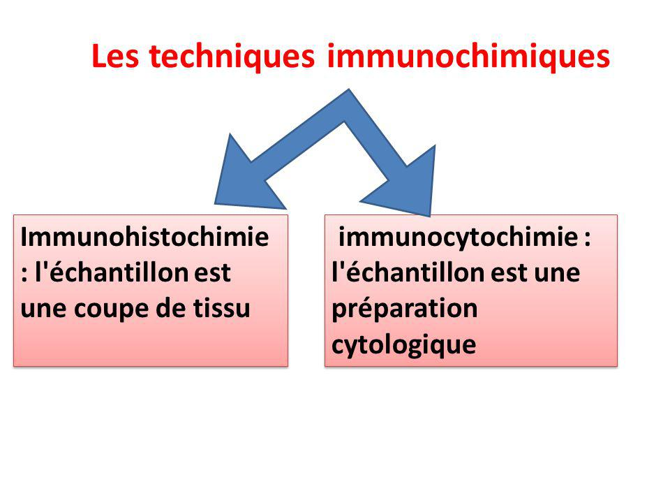 Immunohistochimie : l'échantillon est une coupe de tissu Immunohistochimie : l'échantillon est une coupe de tissu immunocytochimie : l'échantillon est