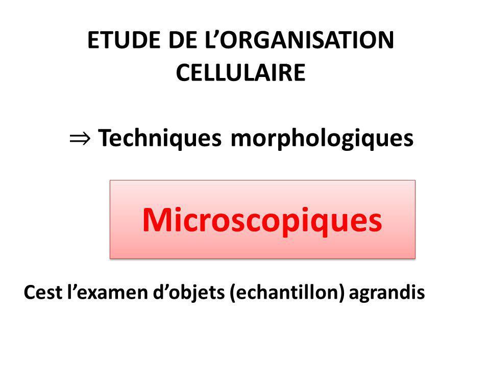 ETUDE DE L'ORGANISATION CELLULAIRE ⇒ Techniques morphologiques Cest l'examen d'objets (echantillon) agrandis Microscopiques