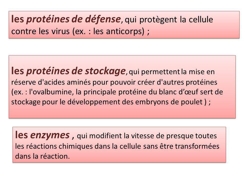 les protéines de défense, qui protègent la cellule contre les virus (ex.
