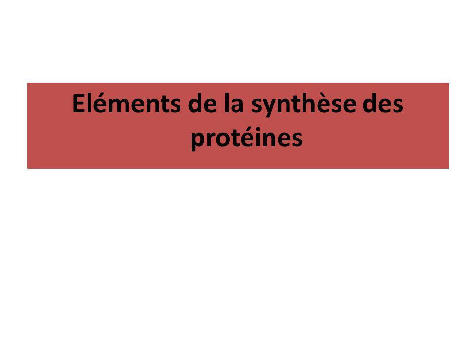 Eléments de la synthèse des protéines