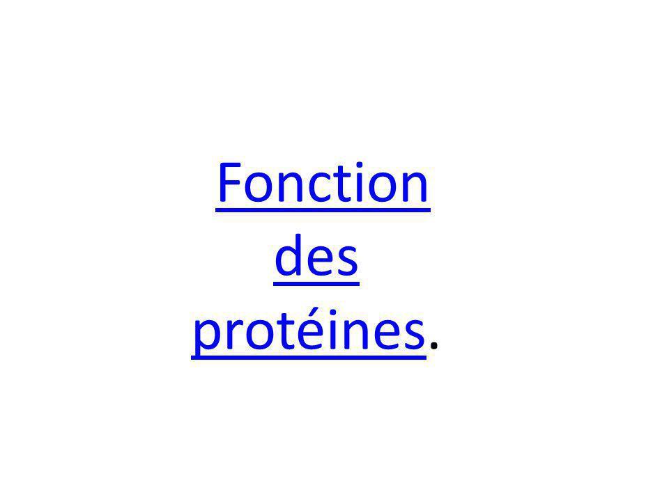 Fonction des protéinesprotéines.