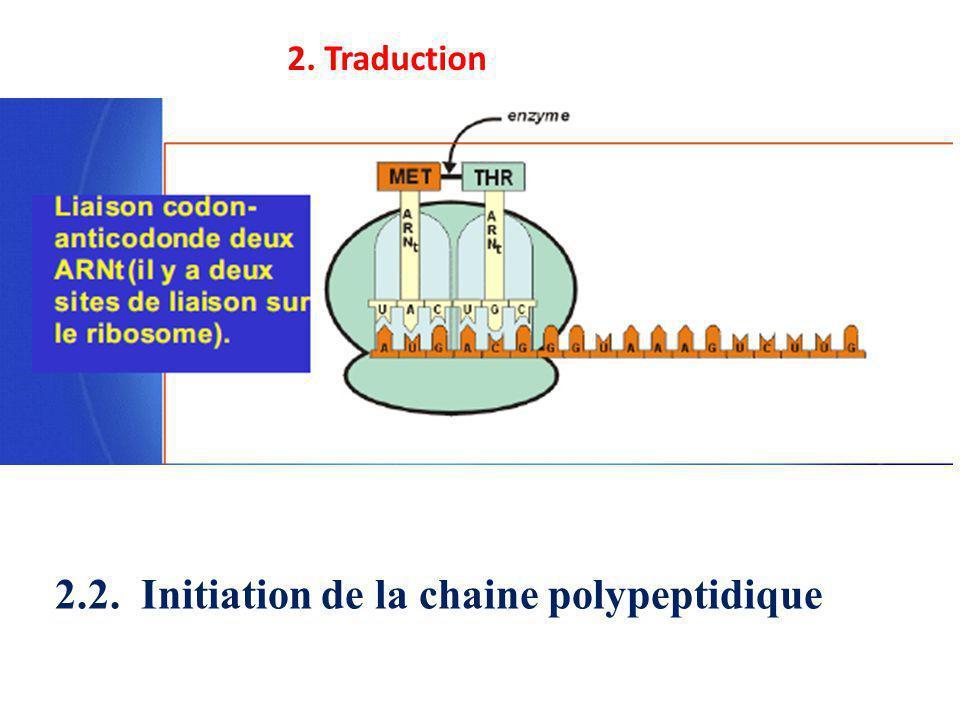 2. Traduction 2.2. Initiation de la chaine polypeptidique