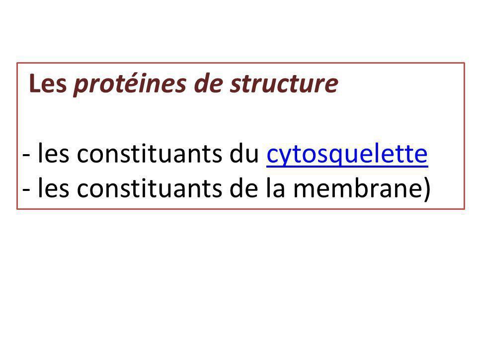 Les protéines de structure - les constituants du cytosquelettecytosquelette - les constituants de la membrane)
