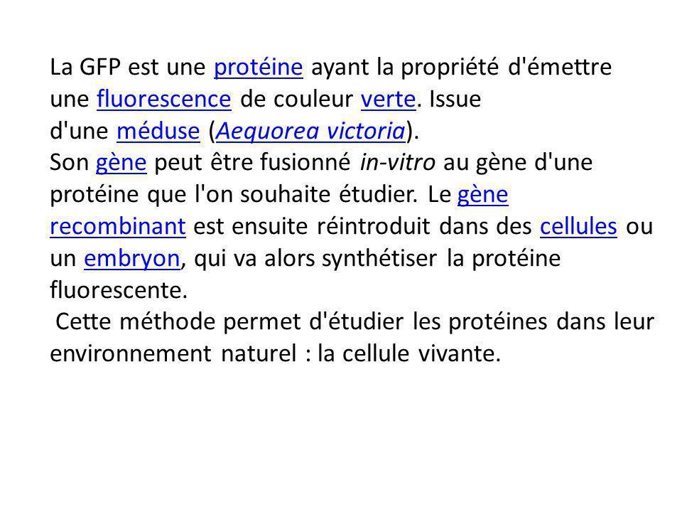 La GFP est une protéine ayant la propriété d émettre une fluorescence de couleur verte.