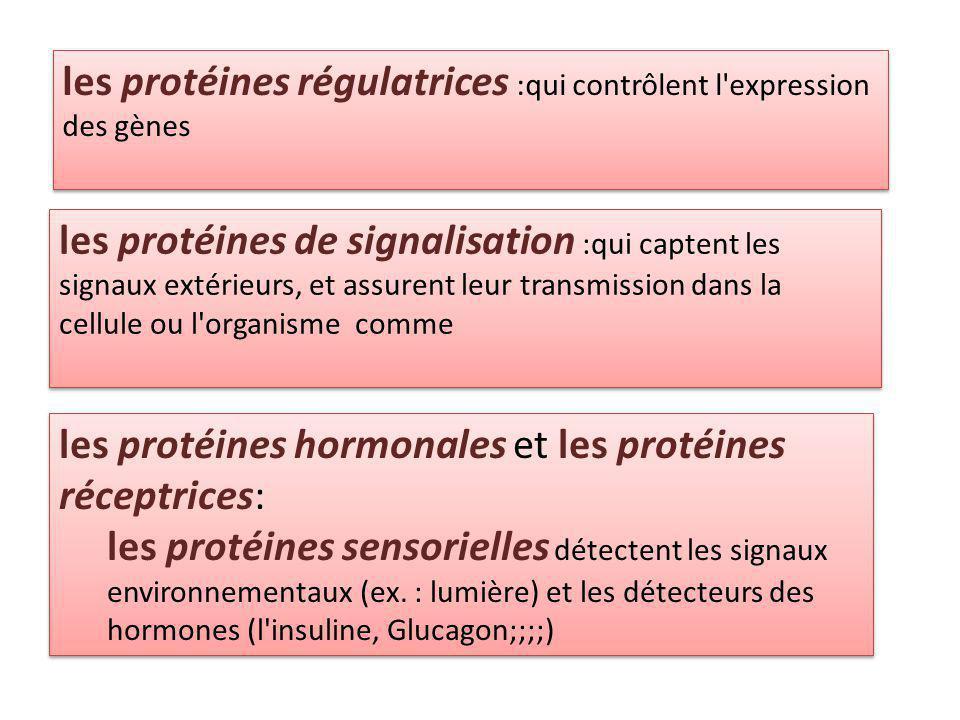 les protéines régulatrices :qui contrôlent l expression des gènes les protéines de signalisation :qui captent les signaux extérieurs, et assurent leur transmission dans la cellule ou l organisme comme les protéines hormonales et les protéines réceptrices: les protéines sensorielles détectent les signaux environnementaux (ex.