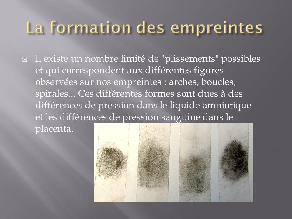  Au cours du développement de l'embryon, on peut observer un gonflement important de l'extrémité de chaque doigt : c'est une zone de multiplication o