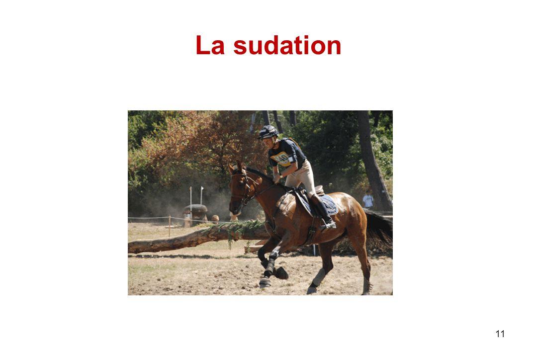 11 La sudation