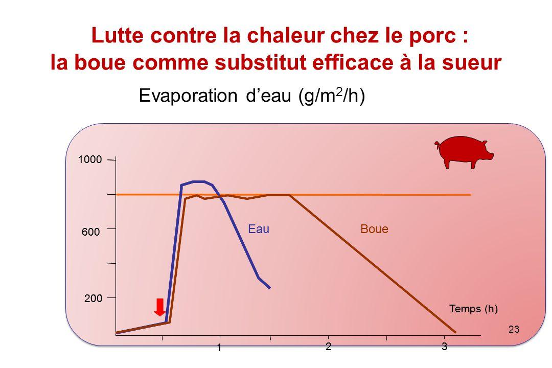 23 Lutte contre la chaleur chez le porc : la boue comme substitut efficace à la sueur Temps (h) 200 600 1000 1 2 3 EauBoue Temps (h) Evaporation d'eau