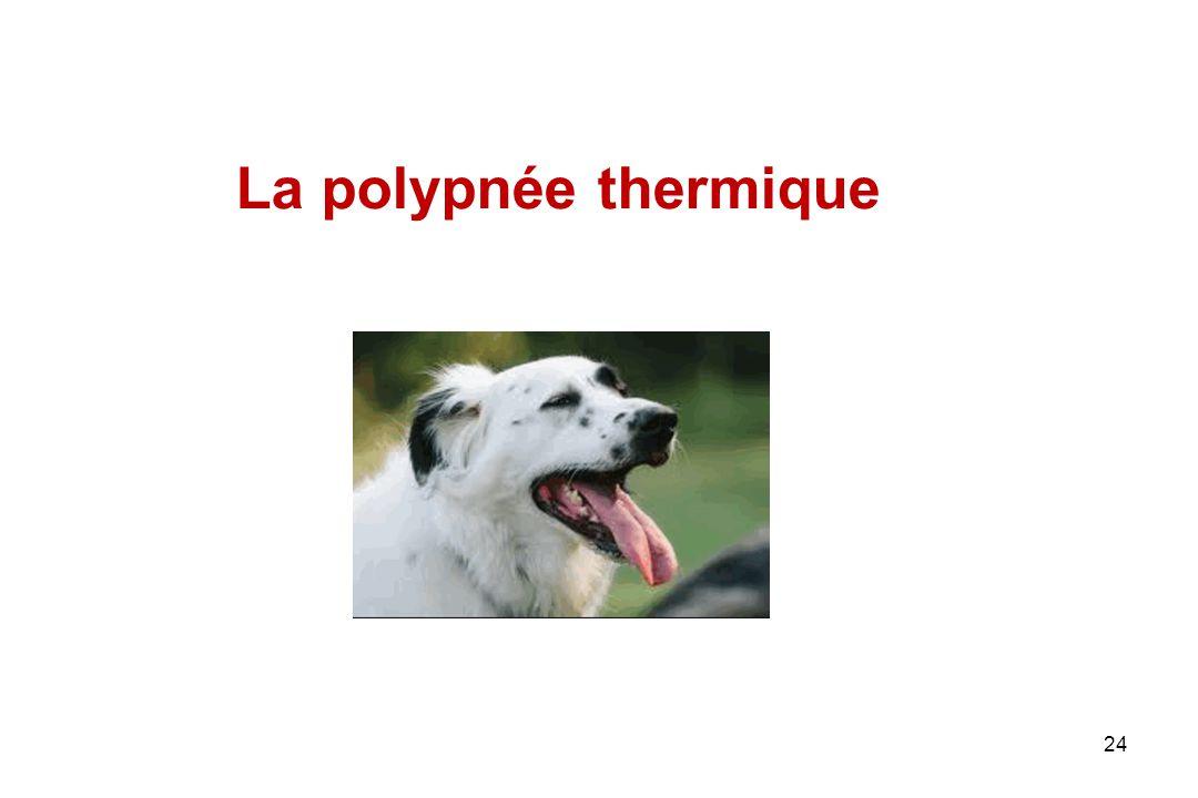 La polypnée thermique 24