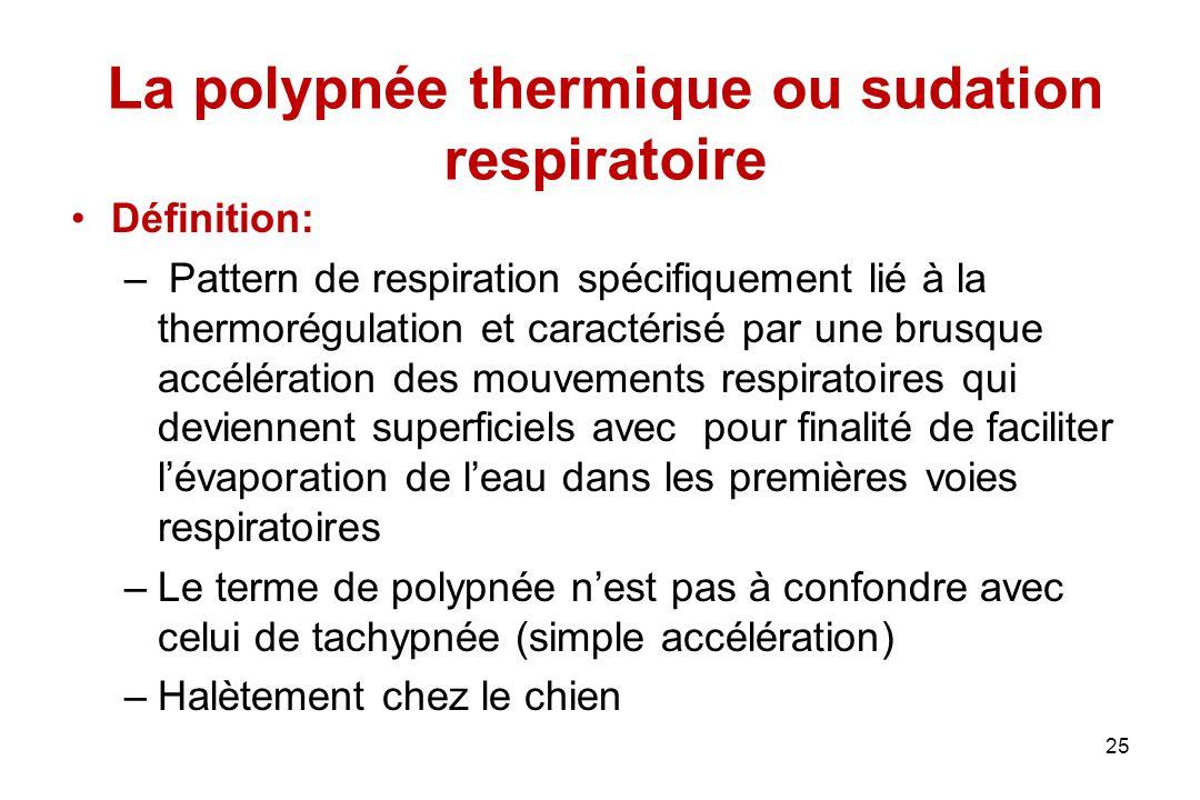 La polypnée thermique ou sudation respiratoire Définition: – Pattern de respiration spécifiquement lié à la thermorégulation et caractérisé par une br