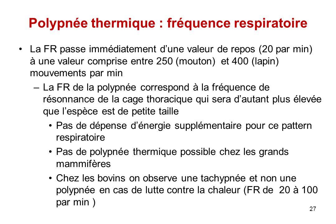 Polypnée thermique : fréquence respiratoire La FR passe immédiatement d'une valeur de repos (20 par min) à une valeur comprise entre 250 (mouton) et 4