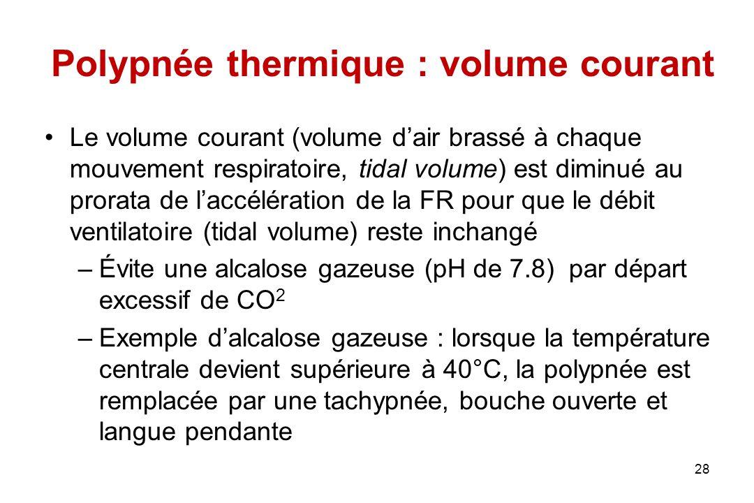 Polypnée thermique : volume courant Le volume courant (volume d'air brassé à chaque mouvement respiratoire, tidal volume) est diminué au prorata de l'