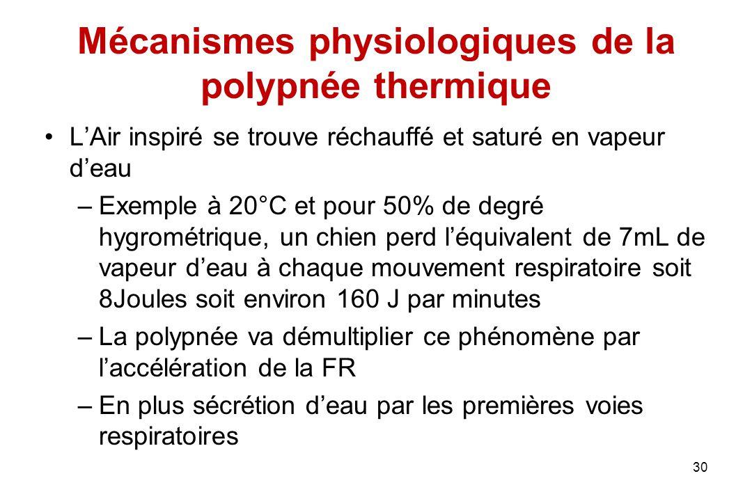 Mécanismes physiologiques de la polypnée thermique L'Air inspiré se trouve réchauffé et saturé en vapeur d'eau –Exemple à 20°C et pour 50% de degré hy