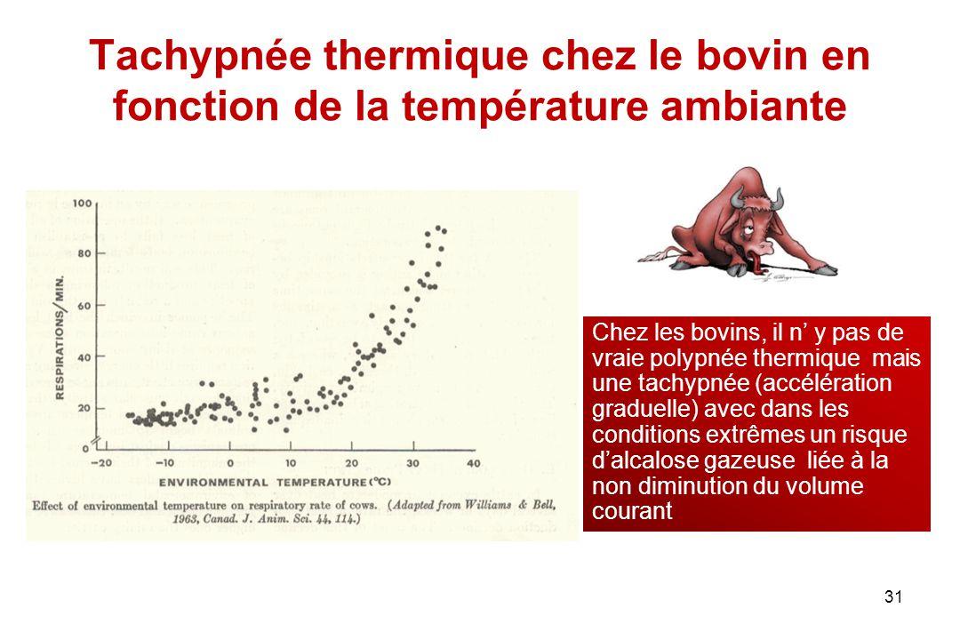 Tachypnée thermique chez le bovin en fonction de la température ambiante 31 Chez les bovins, il n' y pas de vraie polypnée thermique mais une tachypné