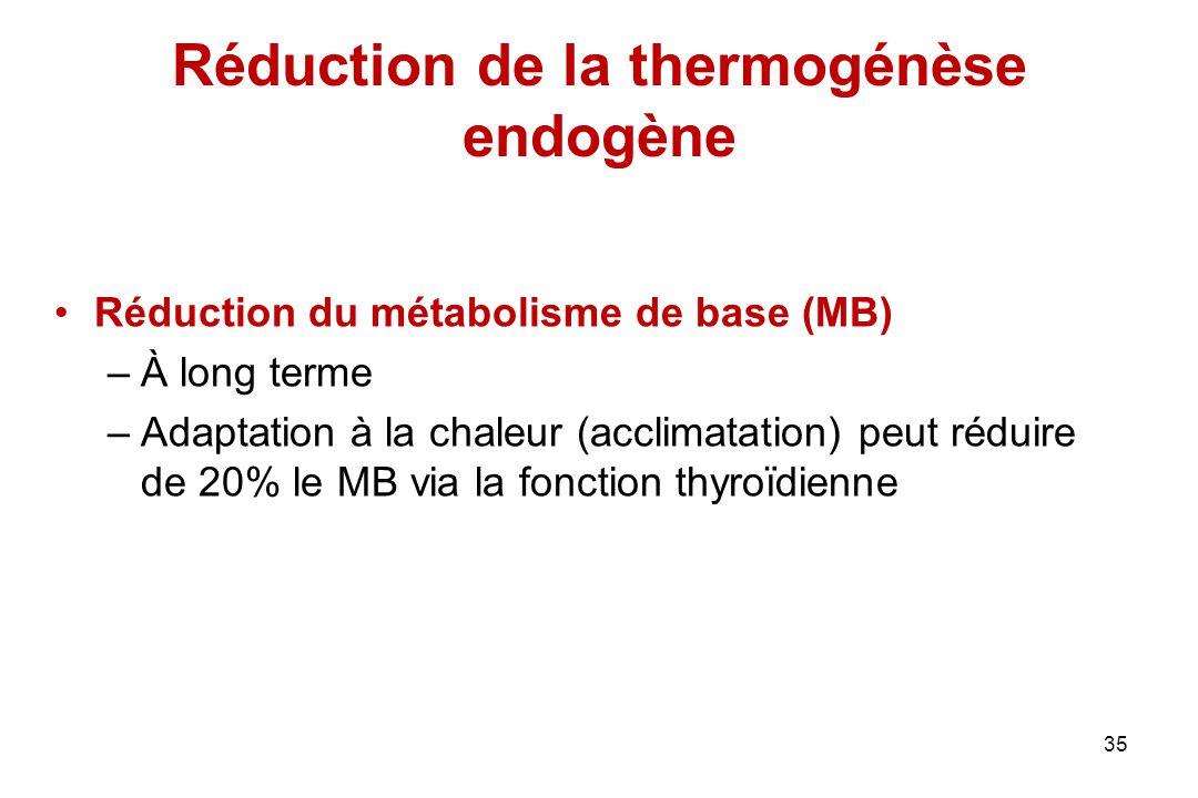 Réduction de la thermogénèse endogène Réduction du métabolisme de base (MB) –À long terme –Adaptation à la chaleur (acclimatation) peut réduire de 20%