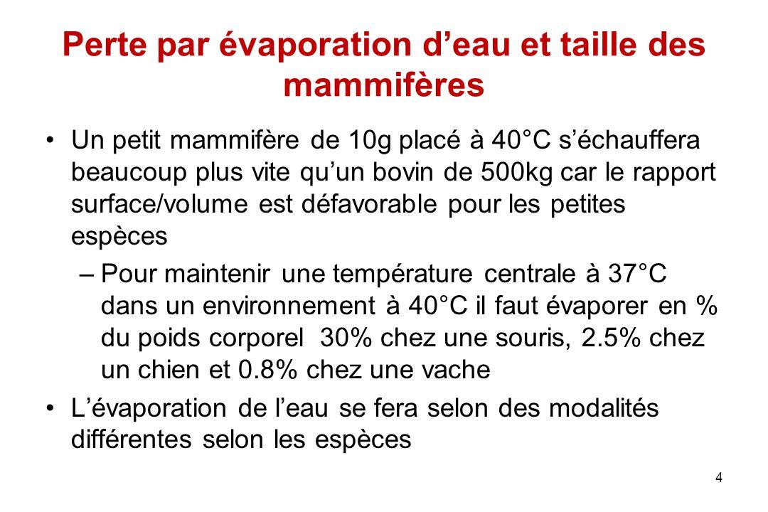 Perte par évaporation d'eau et taille des mammifères Un petit mammifère de 10g placé à 40°C s'échauffera beaucoup plus vite qu'un bovin de 500kg car l