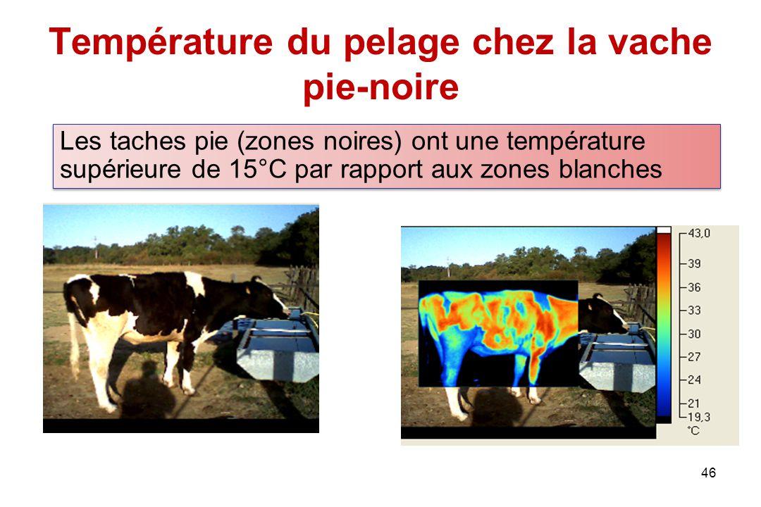 Température du pelage chez la vache pie-noire 46 Les taches pie (zones noires) ont une température supérieure de 15°C par rapport aux zones blanches