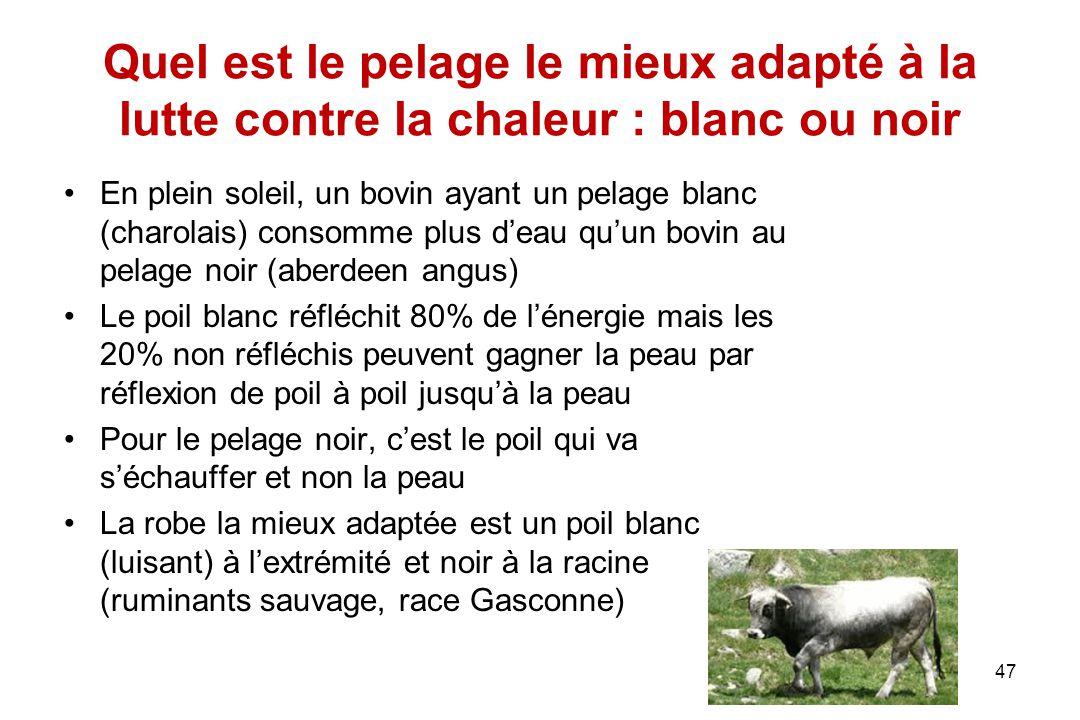 47 Quel est le pelage le mieux adapté à la lutte contre la chaleur : blanc ou noir En plein soleil, un bovin ayant un pelage blanc (charolais) consomm