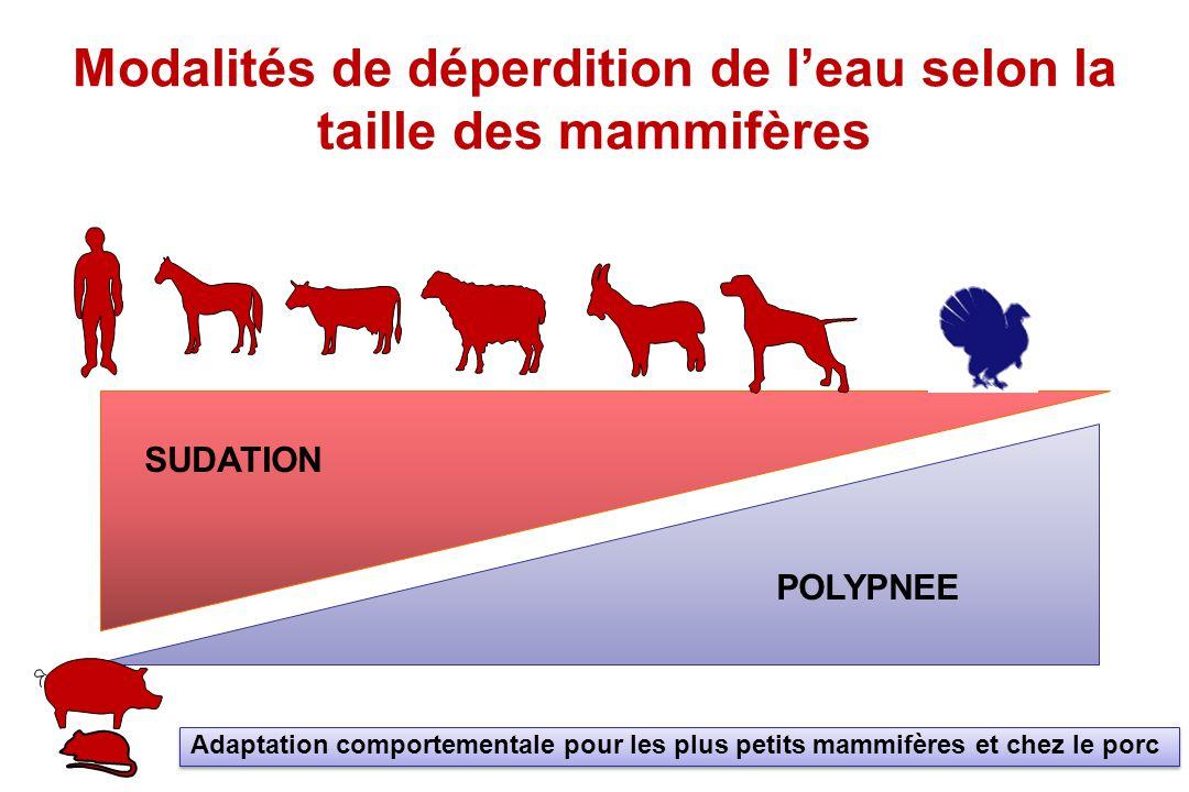 Mécanismes physiologiques de la polypnée thermique L'Air inspiré se trouve réchauffé et saturé en vapeur d'eau –Exemple à 20°C et pour 50% de degré hygrométrique, un chien perd l'équivalent de 7mL de vapeur d'eau à chaque mouvement respiratoire soit 8Joules soit environ 160 J par minutes –La polypnée va démultiplier ce phénomène par l'accélération de la FR –En plus sécrétion d'eau par les premières voies respiratoires 30