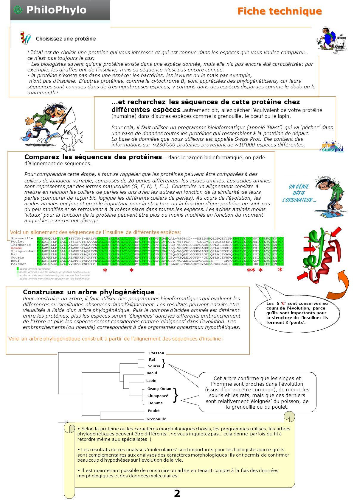 Comparez les séquences des protéines … dans le jargon bioinformatique, on parle d'alignement de séquences.