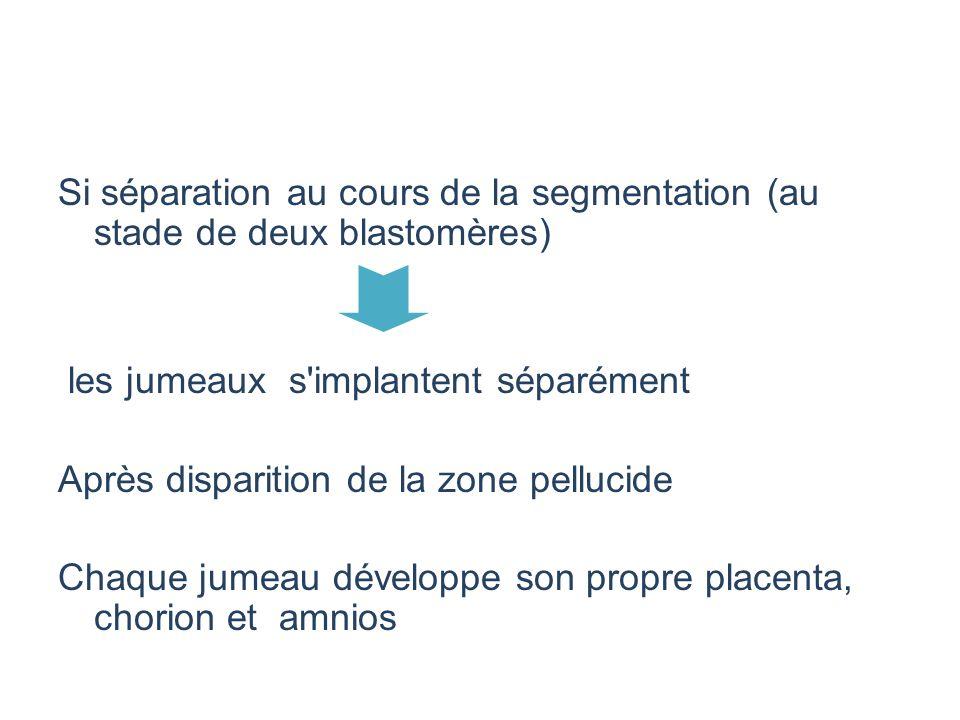 Si séparation au cours de la segmentation (au stade de deux blastomères) les jumeaux s'implantent séparément Après disparition de la zone pellucide Ch