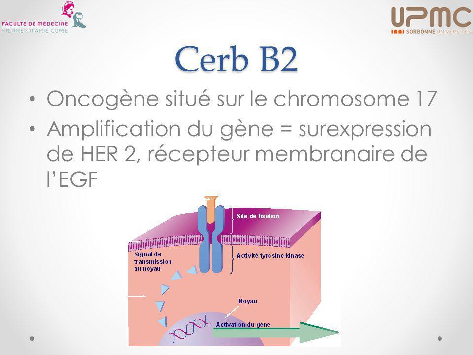 Cerb B2 Oncogène situé sur le chromosome 17 Amplification du gène = surexpression de HER 2, récepteur membranaire de l'EGF