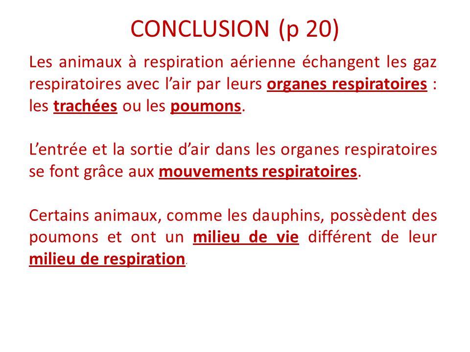 CONCLUSION (p 20) Les animaux à respiration aérienne échangent les gaz respiratoires avec l'air par leurs organes respiratoires : les trachées ou les