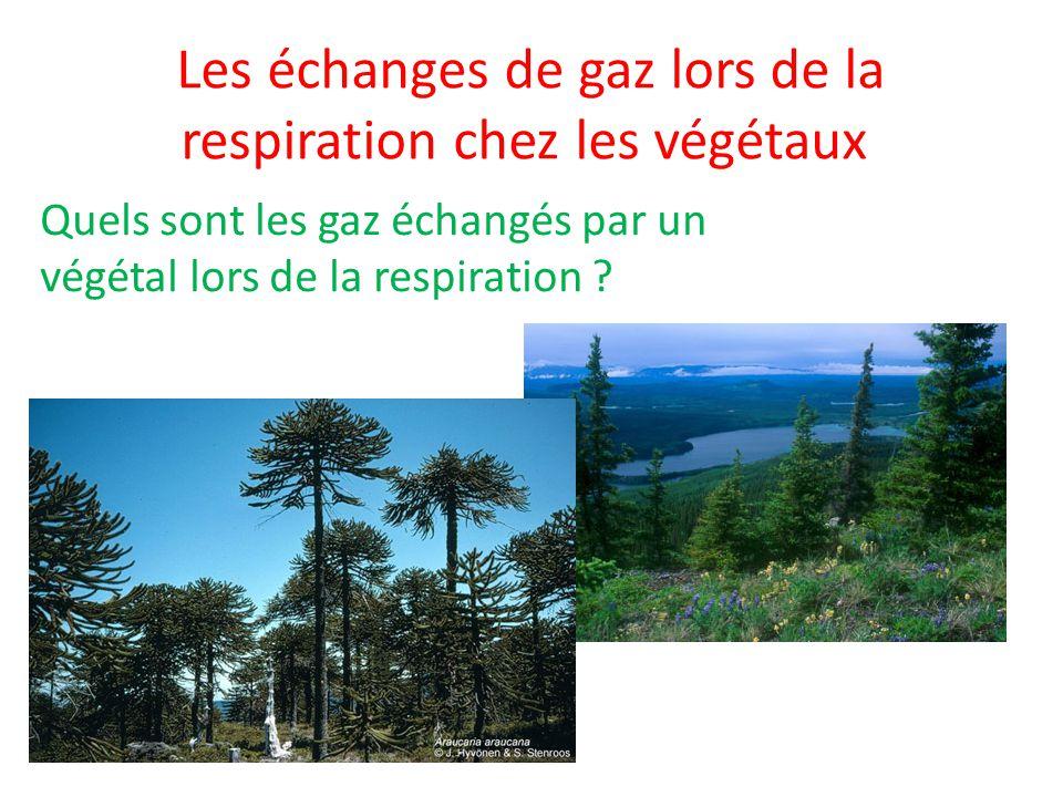 Les échanges de gaz lors de la respiration chez les végétaux Quels sont les gaz échangés par un végétal lors de la respiration ?