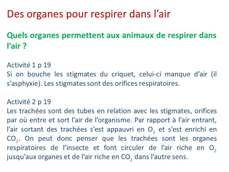 Quels organes permettent aux animaux de respirer dans l'air ? Activité 1 p 19 Si on bouche les stigmates du criquet, celui-ci manque d'air (il s'asphy